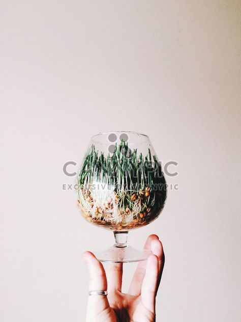 Green wet Grass in a glass - Kostenloses image #184199