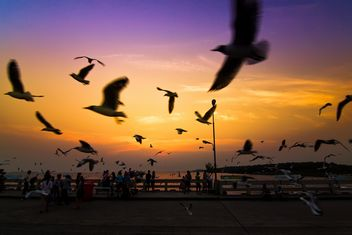 Seagulls flying in twillight sky - image #184279 gratis