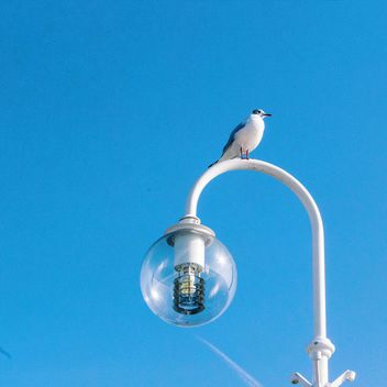 Seagull on the sky background - image gratuit #184629