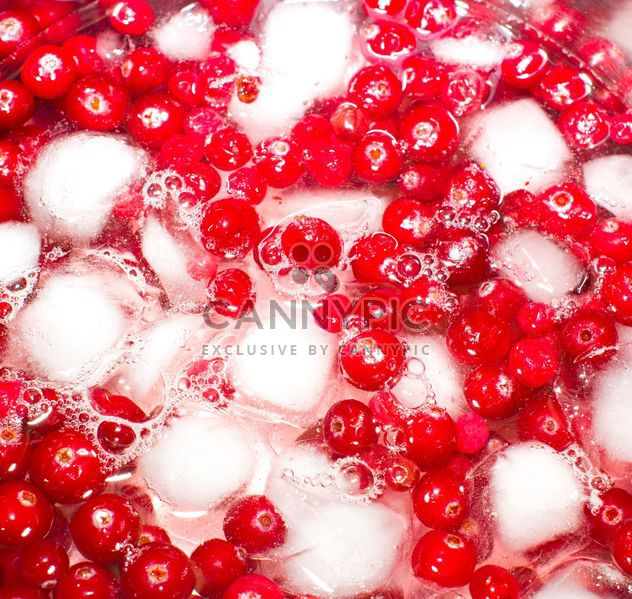 Lingonberry in ice - Free image #185869