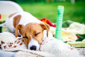 Sleeping puppy - Free image #186169