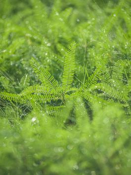 dew on grass - image gratuit #186329