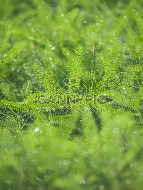 dew on grass - Free image #186329