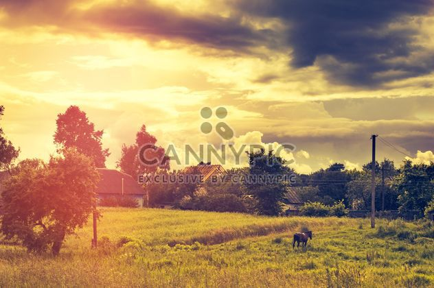 Horse on field in sunlight - Free image #186799