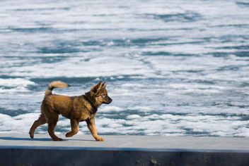 Dog running along the waterfront - image #187779 gratis