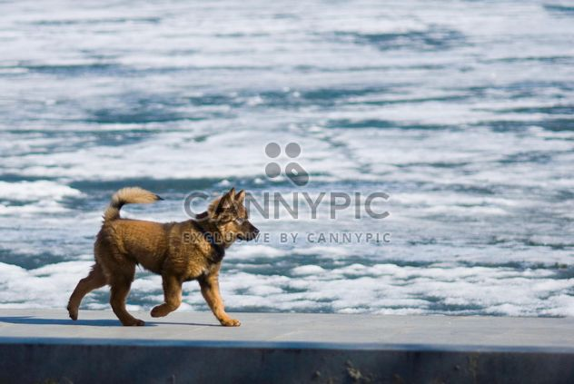 Dog running along the waterfront - Free image #187779