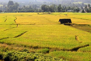 Rice field terraces, Chiang Mai Province, Thailand - бесплатный image #199019