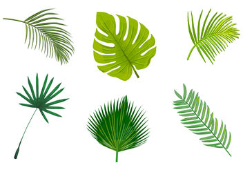 Palm leaf isolated vectors - vector gratuit #200359