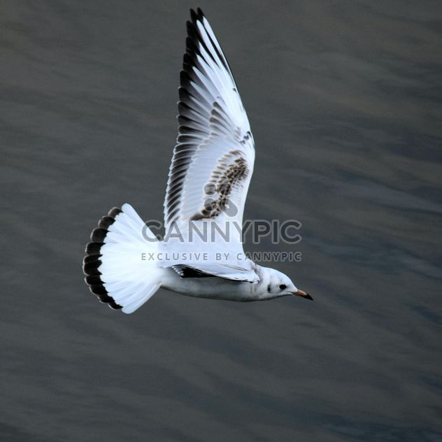 Seagull flying over sea - Free image #201429