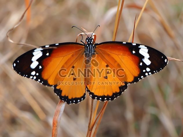 Brown butterfly on grass - image #201549 gratis
