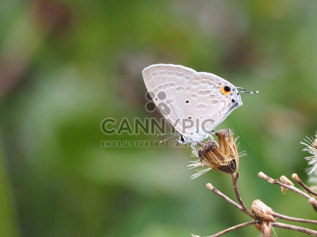 Close-up de mariposa en jardín - image #201569 gratis