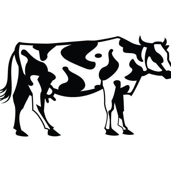 Марта для, картинки коровы черно белые