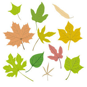 Vector Leaf Collection - vector #203209 gratis