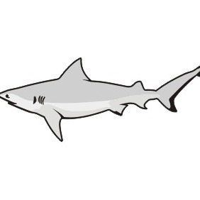 Great White Shark - vector gratuit #210219