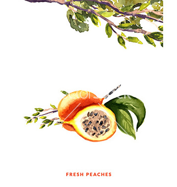 Free peaches watercolor vector - Free vector #211259