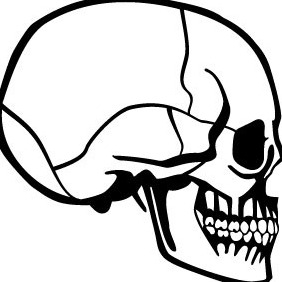 Skull Profile Vector - бесплатный vector #213019