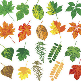 15 Different Vector Leaves - vector gratuit #214449