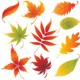Colorful Autumn Leaves - vector gratuit #214459