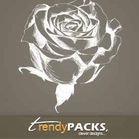Hand Drawn Rose Vector - Free vector #219399