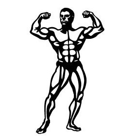 Bodybuilder Vector Image - бесплатный vector #219479