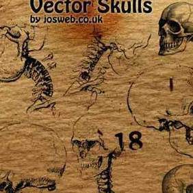 Illustrative Skull Vectors - Free vector #221419