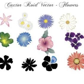 Flower Vector Set In Color - vector gratuit #223159