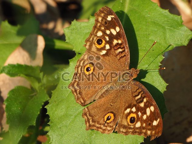Butterfly close-up - Free image #225359