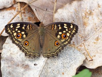 Butterfly close-up - image gratuit #225419