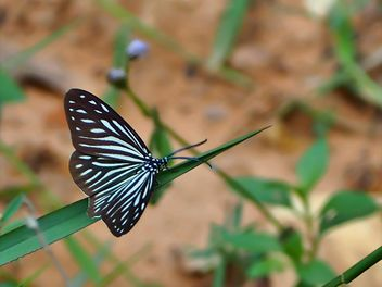 Butterfly close-up - image #225429 gratis