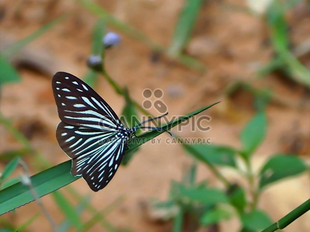 Butterfly close-up - Free image #225429