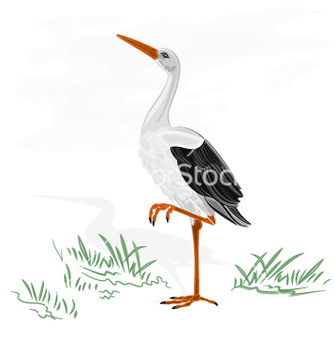 Free stork white wild water bird vector - бесплатный vector #236699