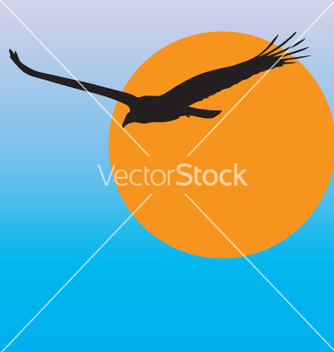 Free turkey vulture vector - Free vector #242969