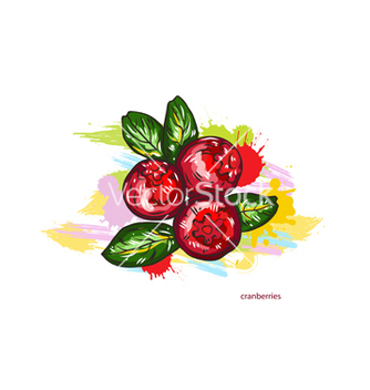 Free cranberries with colorful splashes vector - vector gratuit #243179