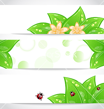 Free set of bio concept design eco friendly banners vector - vector gratuit #243809