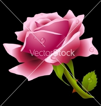 Free pink rose vector - Free vector #267829