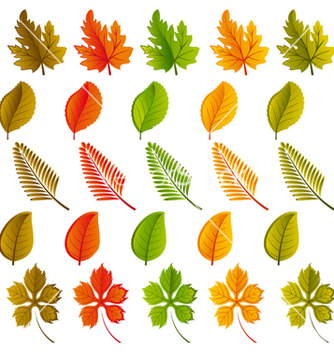 Free leaves vector - vector #269919 gratis