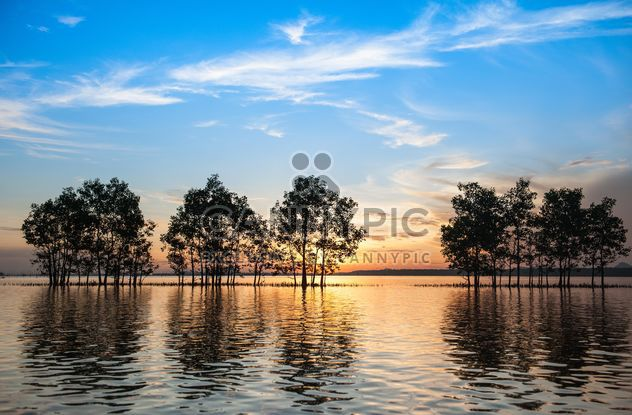 Trees growing from water - Free image #271829