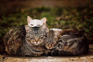 Three homeless cats - image gratuit #271959