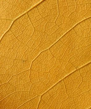 Yellow leaf backgroung - бесплатный image #272609