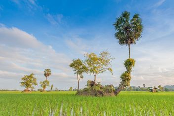 Rice fields - Free image #272959