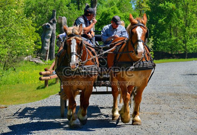 carriage drawn by two horses - бесплатный image #274919