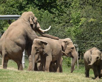 Elephants in the Zoo - Free image #274939