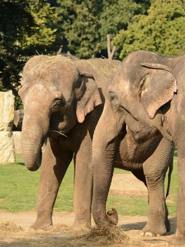 Elephants in the Zoo - Free image #274999