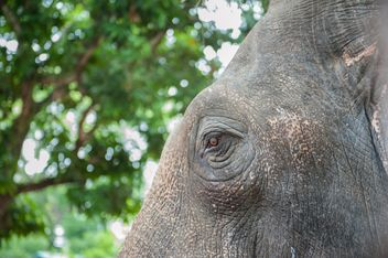 Elephant eye - image #275009 gratis