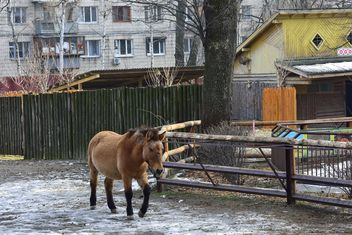 Wild horse in th Zoo - image gratuit #275029