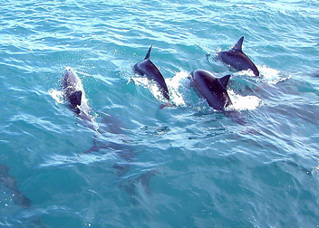Dolphin Crest - Free image #275329