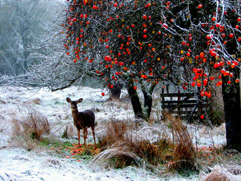 Winter Meal - image #275539 gratis