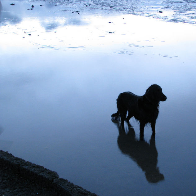 Even dogs get the blues - Kostenloses image #275839