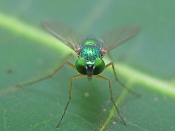 Green fly - image #276549 gratis