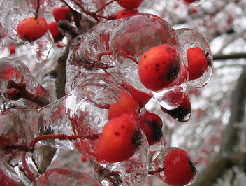 Another Central Illinois Ice Storm - Kostenloses image #276769